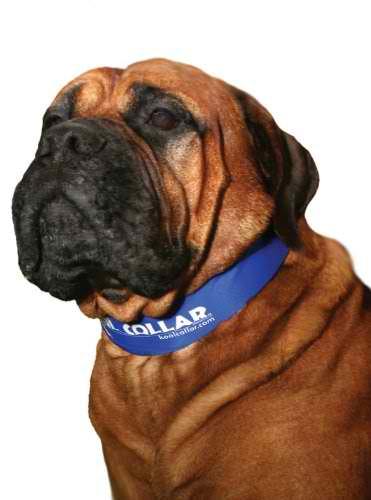 Bulldog Kool Collar Large