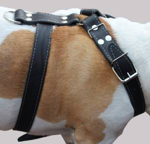 Leather Bulldog Harness