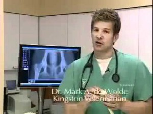Osteoarthritis in Bulldogs